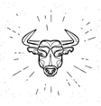 Vintage angry bull vector image