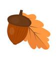 oak acorn is flat or cartoon style isolated on vector image