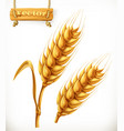 wheat 3d icon vector image