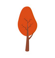 autumn tree with red foliage vector image