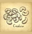 handful of cashews vector image vector image