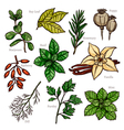 Sketch Herbs And Spice Color Collection vector image vector image