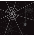 spider white web and litle spider black eps10 vector image vector image