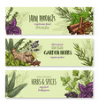 banners set of natural spices and herbs vector image vector image