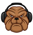 Bulldog with headphones vector image