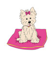 cairn terrier dog breed vintage vector image vector image