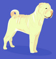 chinese shar pei white dog vector image vector image