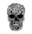 hand drawn human skull made from grapevine design vector image vector image