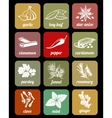 Herbs and spices cook culinary ingredients vector image vector image