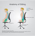 anatomy of sitting vector image