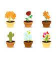 beautiful decorative modern flowers in clay pots vector image vector image