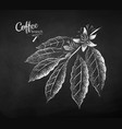 chalk drawn sketch coffee branch vector image vector image