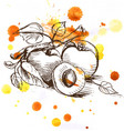 sketch - apricot fruit vector image