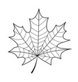skeleton maple leaf isolated vector image vector image