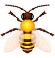 cartoon wasp vector image