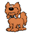 cute cartoon goldendoodle dog cartoon vector image