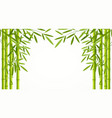 green bamboo stems with leaves vector image vector image
