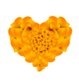 Orange French Marigold Flowers in A Heart Shape vector image