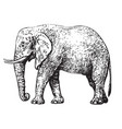 sketch of walking african elephant sketch style vector image