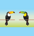 toucans vector image vector image