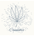 cannabis and vintage sun burst frame vector image