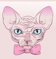 cat without fur hairless sphinx pink bow vector image
