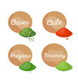chives and chile spices set vector image vector image