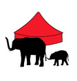 elephants in circus vector image