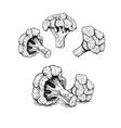 Hand drawn set of broccoli sketch vector image vector image