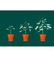 Stage Growth of a Tree Money vector image
