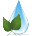 Water drop and two leaves vector image vector image