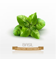 basil leaves isolated on white background vector image