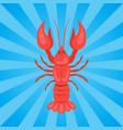 Crawfish or crawdads freshwater lobster yabbies