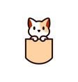 cat in pocket vector image