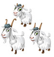 cute goats with green eyes animals vector image vector image