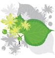 linden flowers with foliage vector image vector image