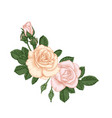 beautiful bouquet with pastel pink roses buds and vector image vector image