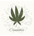 cannabis and vintage sun burst frame vector image vector image