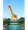 giraffe playing roller skate in nature vector image vector image