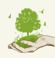 green tree in the hand vector image vector image
