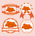 the theme almond vector image vector image