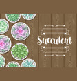 card with succulents in pots echeveria jade vector image vector image
