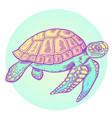hand drawn sea turtle vector image vector image