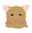 portrait of a cougar vector image vector image