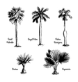 Set of hand drawn palm sketches vector image vector image