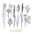 wild flowers hand drawn set ink herbs herbal vector image