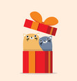couple cat with gift box vector image