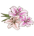 bouquet of three pink lily flowers hand drawn vector image vector image