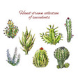 several hand-drawn cacti of succulents isolated vector image vector image