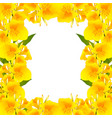 yellow canna lily border vector image
